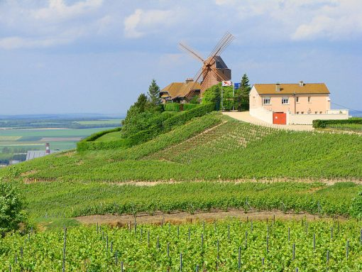 France Champagne vineyards Verzenay Mill