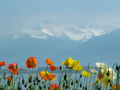 Swizterland Lake geneva Alps view
