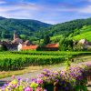 Alsace Wine Road 01
