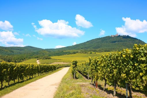 Alsace Wine Road 02