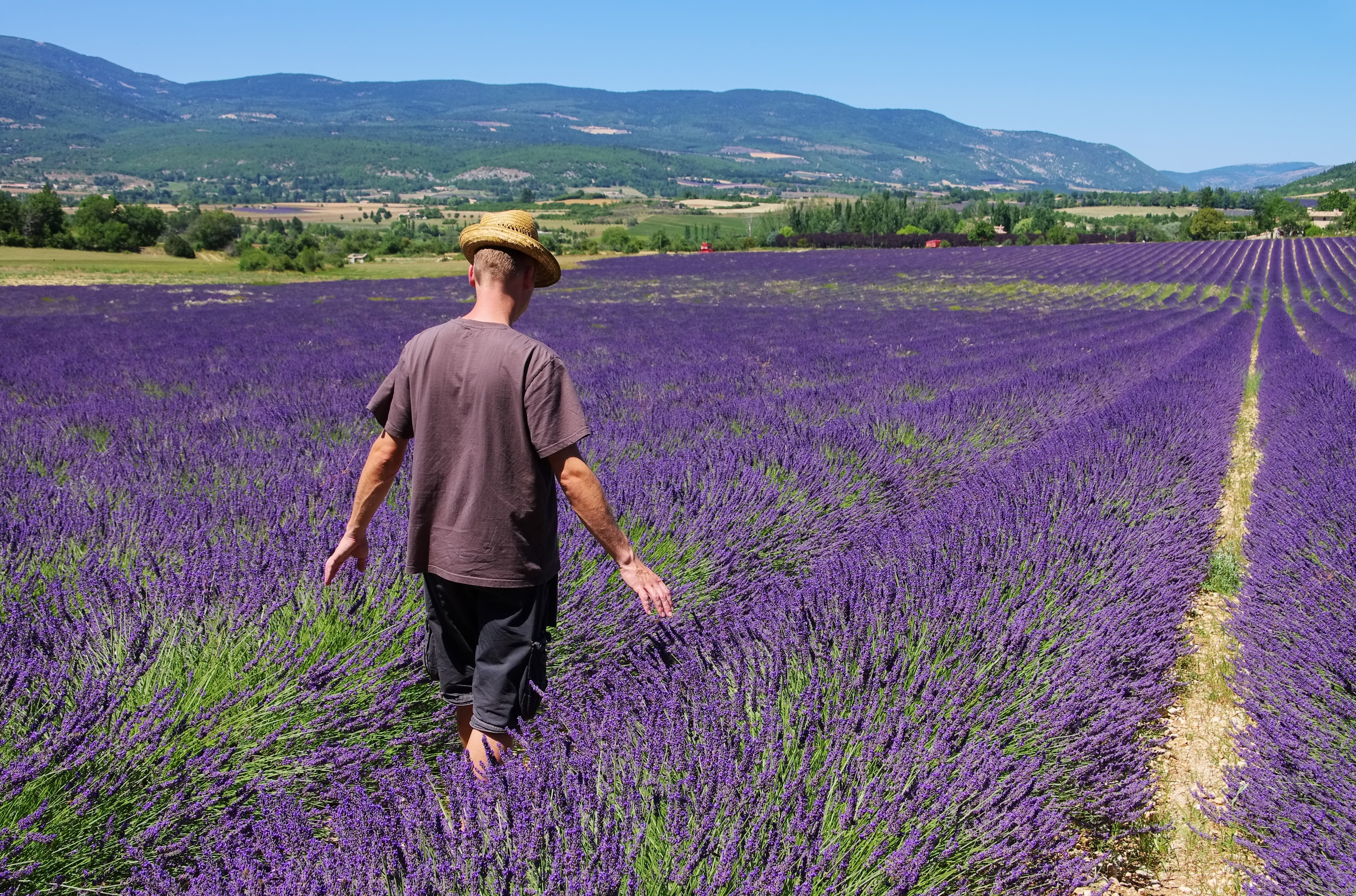 Can Lavender And Tea Tree Oil Make Men's Breasts Grow